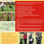 Chenies Charity Pet Show