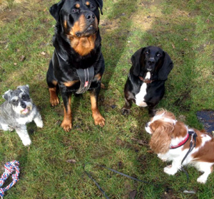 Dexter and Friends - Dog Walking - High Wycombe