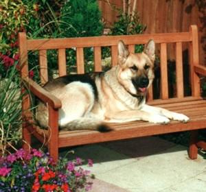 Stella - Dog Walking - High Wycombe