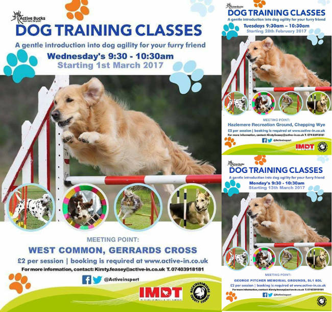 IMDT_dog_agility_classes_2017